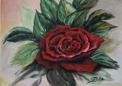 KF 0497 - Rose -